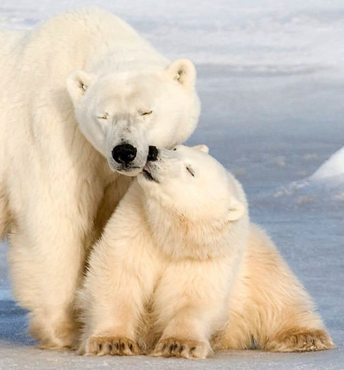 20 photos of mother's love ❤