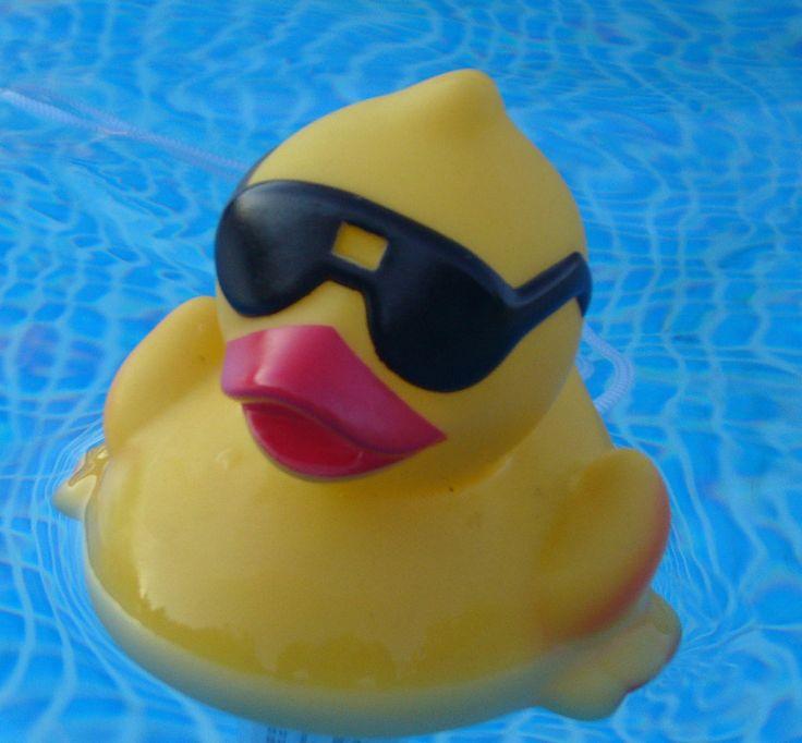 Aquí puedes descargar gratis una imagen de un pato de goma en una piscina. Este pato de goma en concreto lleva gafas de sol > http://imagenesgratis.eu/imagen-de-un-pato-de-goma/