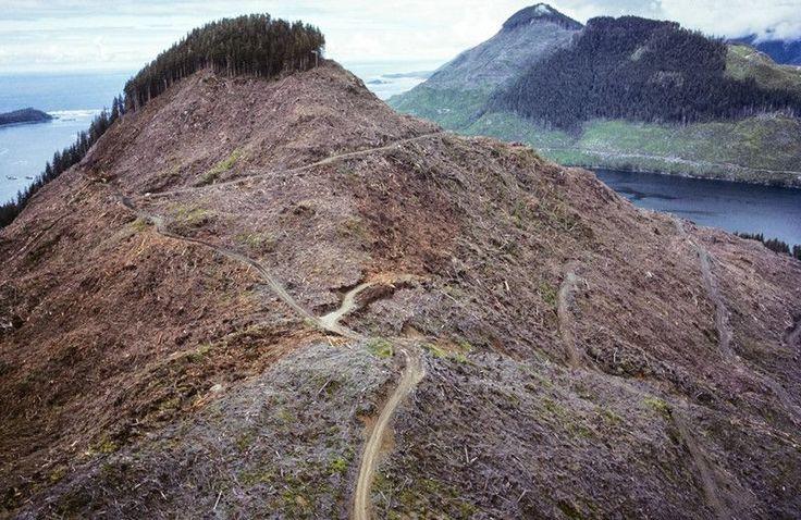 Przygnębiający krajobraz po wycince drzew w Kanadzie.