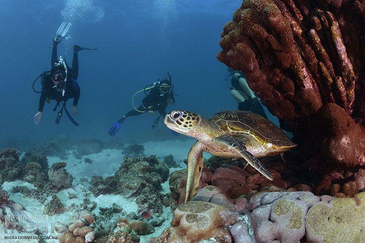 Ningaloo Reef- 2 dives