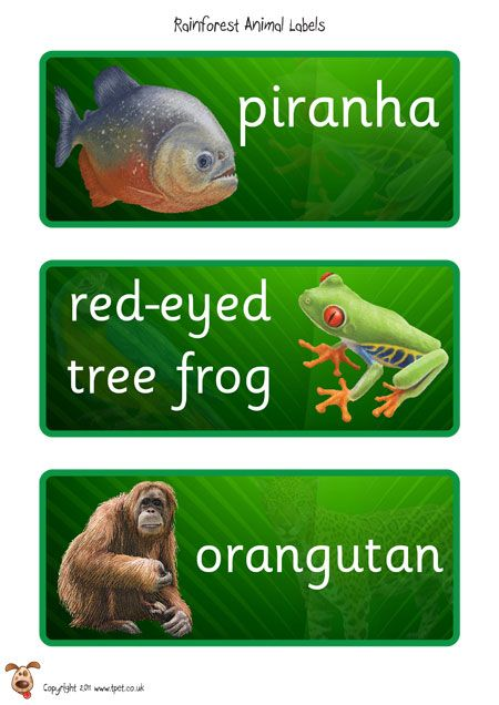 Teacher's Pet - Rainforest Eco Word Mat - FREE Classroom Display Resource - EYFS, KS1, KS2, rain, forest, deforestation, trees, monkeys, snakes, parrots, sustainability
