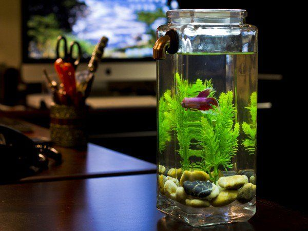 Glass fish tanks self cleaning aquarium that functions for Fish that clean tanks