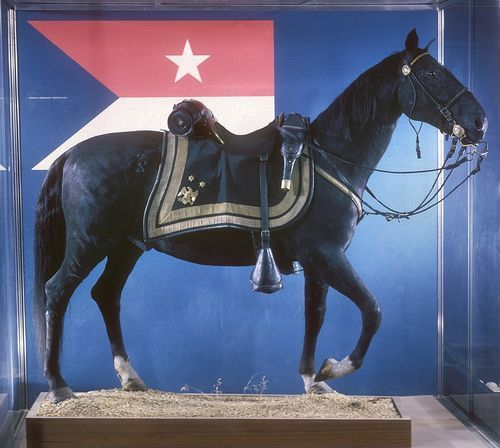 General Philip Henry Sheridan's horse Winchester was wounded in Civil War battles and commended for his speedy, reliable service to the Union Army.