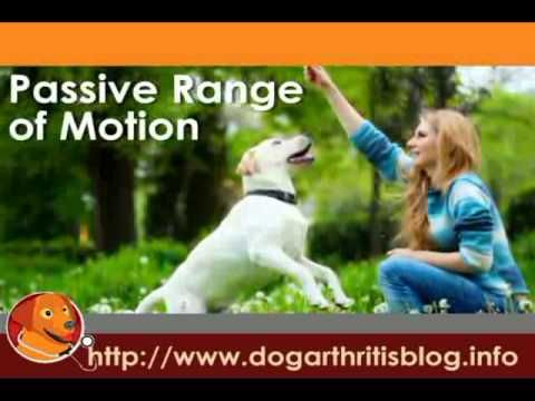 Dog Physical Therapy Series Part 1 - The Benefits of Early Mobility