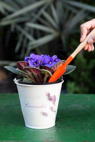 A flor não precisa de adubo. Caso fique doente, use um fertilizante para violetas