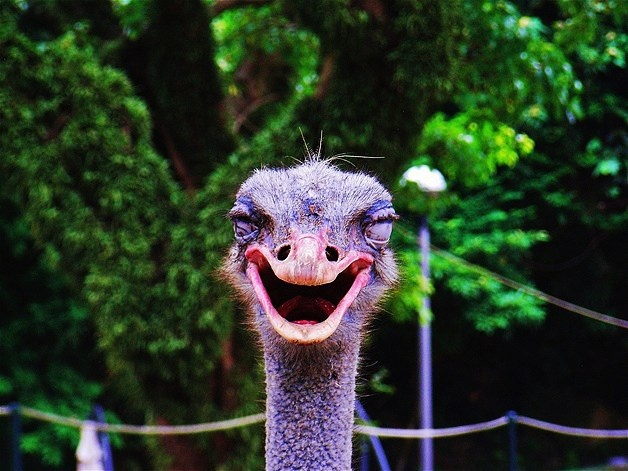Funny laughing animals