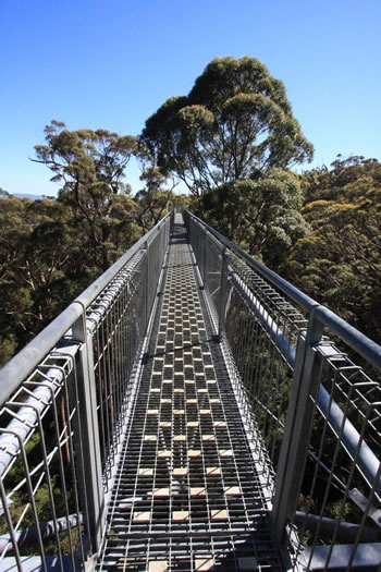 Valley of the Giants Treetop Walk is on the Walpole Portion of the Bibbulmun Track, crossing into the Denmark Portion of the Track