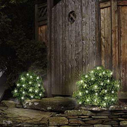Green Christmas lights on bushes