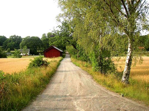 looks just like the road to my mother in laws house... love this!