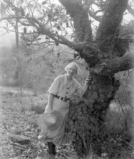 Margaret Preston, Banksia tree at Berowra. Australian artist.