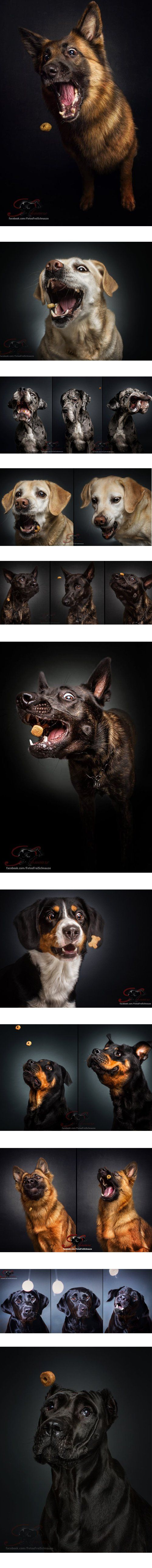 Ein Fotograf nimmt Hunde auf,  die gerade ein Leckerli fangen!