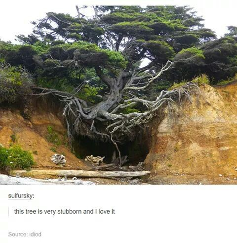 This tree is very stubborn, it makes me sad and kinda in pain to watch