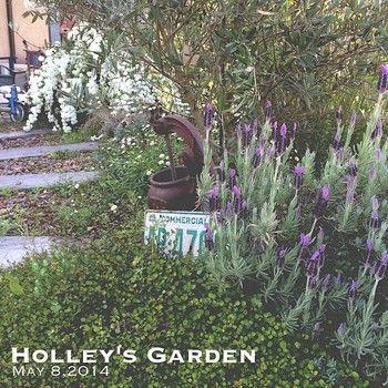 ラベンダーは香りもとても素敵だし、色味も雰囲気があるので北欧ガーデニングにもおすすめのお花です。