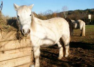 Moniteur diplomé d'Etat BPJEPS Tourisme Équestre et Attelage, Sébastien AMIEL vous accueille pour vous faire découvrir l'équitation de pleine nature et l'attelage à cheval et à poney sur un site privilégié au pied du Canigou. Cavalier randonneur depuis l'âge de 6 ans, il vous fera partager son amour et sa passion du cheval grâce à son expérience acquise au fil des années dans une ambiance conviviale et familiale. http://lesecuriessantjaume.fr/