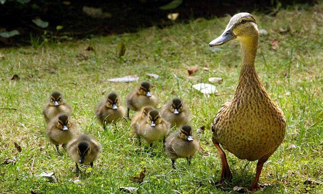 Use your loaf... and don't feed bread to the ducks