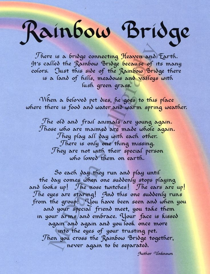 Rainbow Bridge poem for the loss of a pet. Description from gb.pinterest.com. I searched for this on bing.com/images