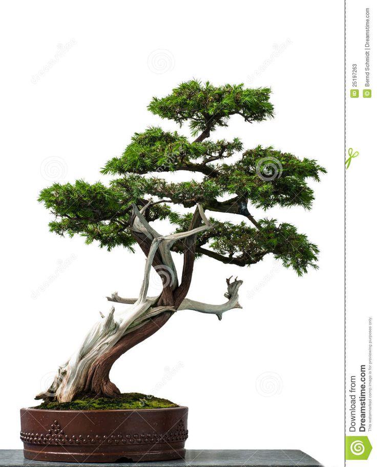 10 best art tree references images on pinterest for Koi larousse
