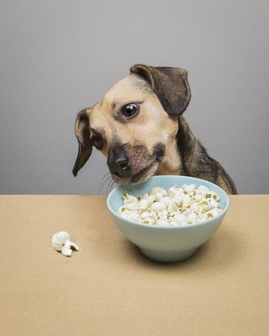 Why popcorn is a healthy dog treat.  Photo by @Tonya Seemann Pet Photography: