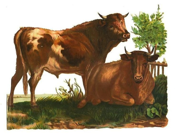 GUERNSEY cow and bull,  pair Victorian die cuts