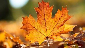 Sonbahar Yaprakları için Birbirinden Güzel Fotoğraflar