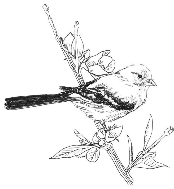 It Is A Bit Simple As Far Drawing Goes But I Liked So Thought Id Share Another Birds And Blooms Photo Goldfinch Pen Ink
