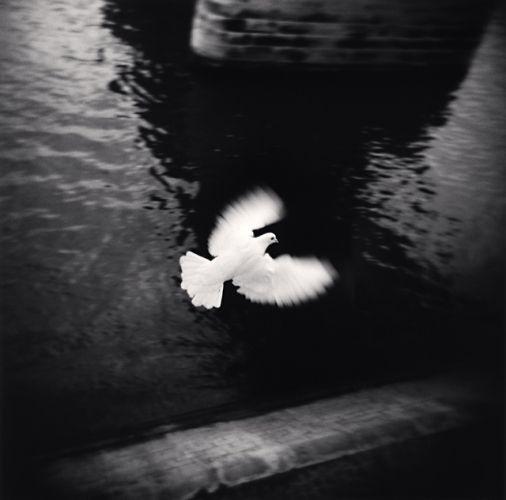 Michael Kenna White Bird Flying, Paris, France, 2007
