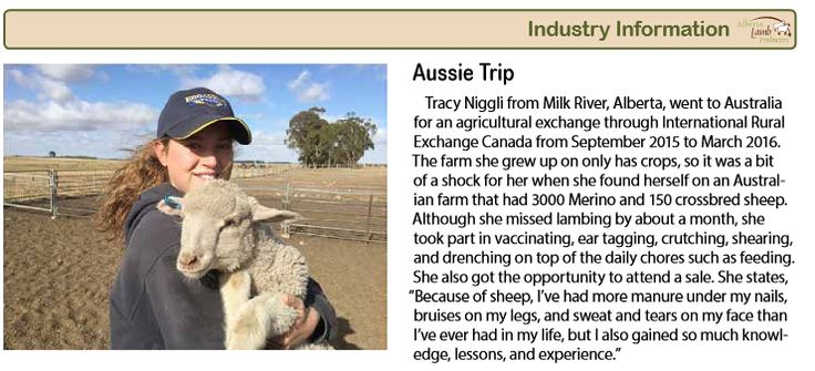 Trainee Tracy Came back from Australia and here is what she had to say about her IRE Canada Experience! Article from Alberta Lamb Producers