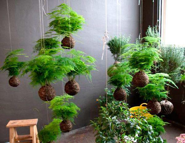 plantas com cordas