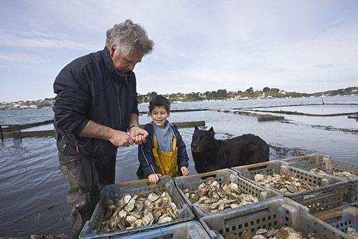 Huîtres creuses d'Yvon Madec. Crédit : Sudres Jean-Daniel / hemis.fr