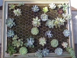 DIY succulent  wall garden.