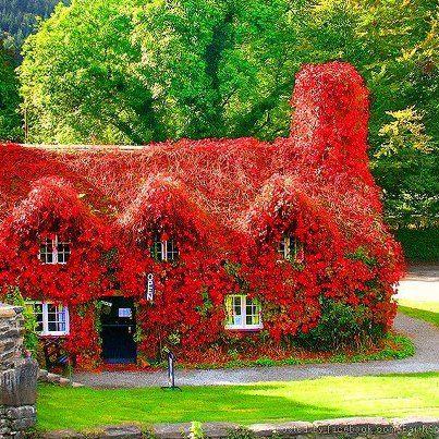 red flower cottage