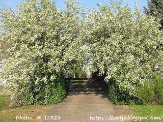 Új cikk: Április vége a kertben, http://kertinfo.hu/aprilis-vege-a-kertben/, ezekben a témakörökben:  #Burkolat #cukkíni #Díszkert #Fóliasátrak #Fűszer #Kert #Kéziszerszámok #Konyhakert #Konyhakertieszközök #Madarak #Mag #talajtakarás #Tavaszi #tippek #Tőzeg #uborka #Vetőmag, írta: Ilkertje A cikket itt olvashatod http://kertinfo.hu/aprilis-vege-a-kertben/