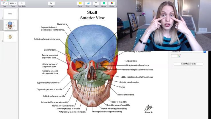 Dental Anatomy by Dentalelle  Learn more in The Board Exam Prep Academy Here:  http://www.dentalelle.com/welcome.html  Dentalelle Tutoring is an online tutoring web site for dental hygiene and dental assisting students.  Andrea Twarowski is the owner of Dentalelle and has been tutoring for 12+ years.  She currently works part time as a clinical dental hygienist and advanced skills as a restorative dental hygienist.  Tutoring is teaching is her true passion!
