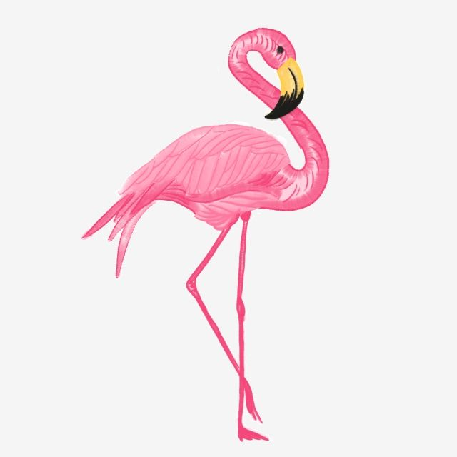 Watercolor Flamingo Vector, Watercolor, Flamingo, Vector