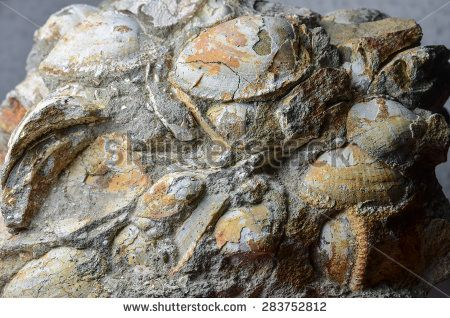 block of brown and white fossil shells - stock photo