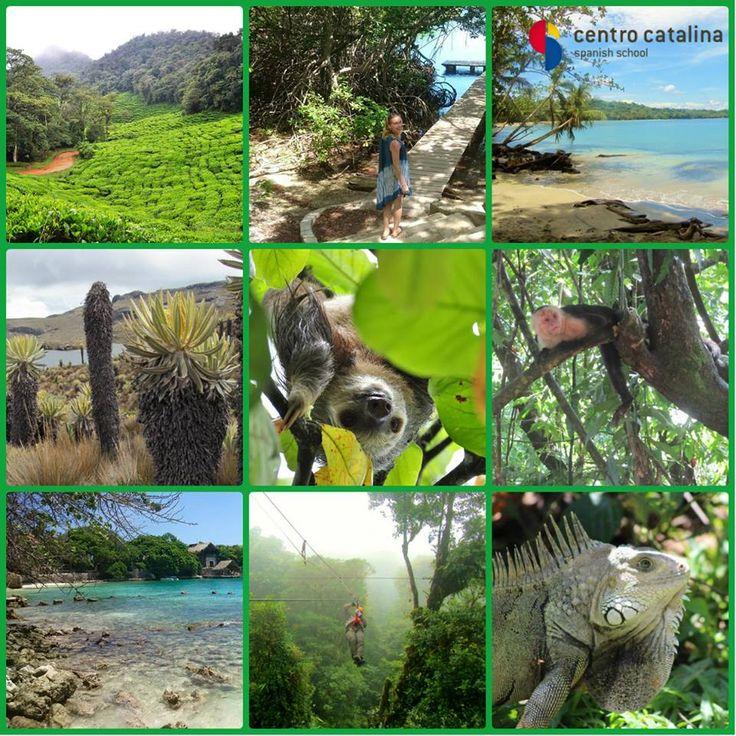 #biodiversity #visitcolombia #islasrosario #parquetayrona #jungle #amazonia #centrocatalina