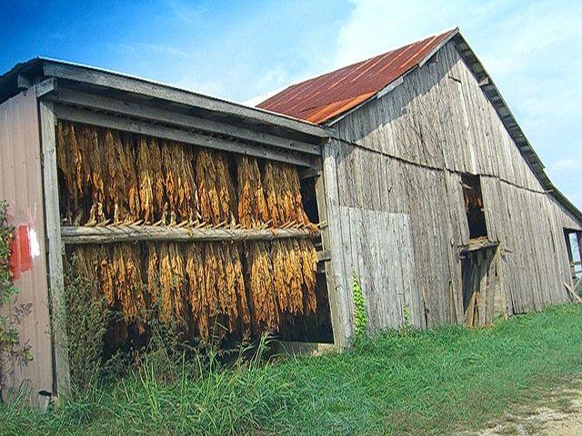 Pinterest barn homes home design idea for Tobacco barn house plans