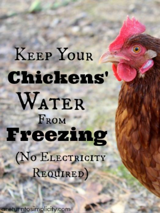 Keep Your Chickens' Water From Freezing - No Electricity Required!
