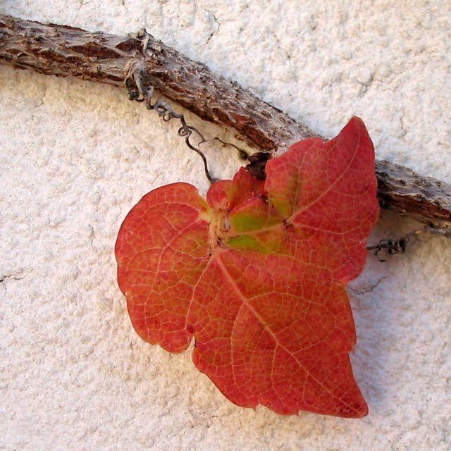 bicocacolors: en rojo