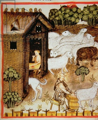 Nova 2644 fol.59r Sheep farming: sweet milk, from 'Tacuinum Sanitatis'   Italian School, (14th century)  Osterreichische Nationalbibliothek, Vienna, Austria  Codex Vindobonensis;  14th (C14th)   Farm Animals  Medieval Life