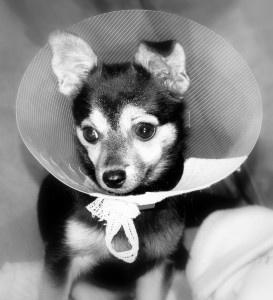 Pet Insurance Information