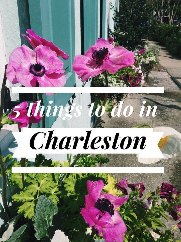 5 must-dos in Charleston