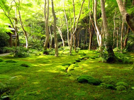 """Spots: Moss temple (Kokedera), Kyoto, Japan Saihō-ji (西芳寺) is a Rinzai Zen Buddhist temple located in Matsuo, Nishikyō Ward, Kyoto, Japan. The temple, which is famed for its moss garden, is commonly referred to as """"Koke-dera"""" (苔寺), meaning """"moss temple"""". More information in te wikipedia here."""