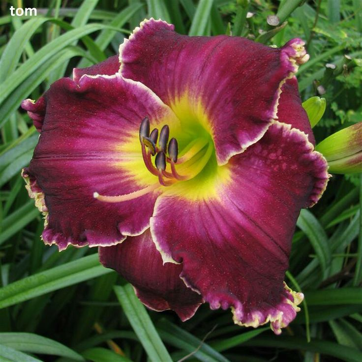 Statement Clutch - Red & White Day Lilies by VIDA VIDA nK83Hc