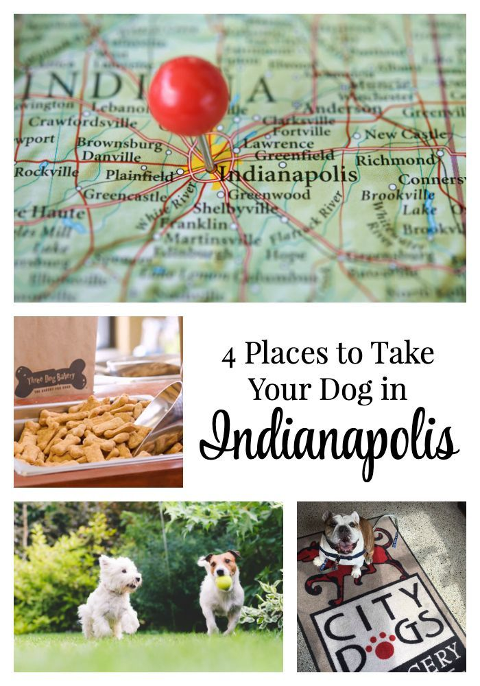 Spring Is Almost Here And I M Sharing 4 Places To Take Your Dog
