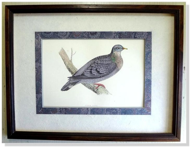 Morris- Stock Dove -1892 British Birds Woodblock Engraving Archival Framed #Vintage123yearsold