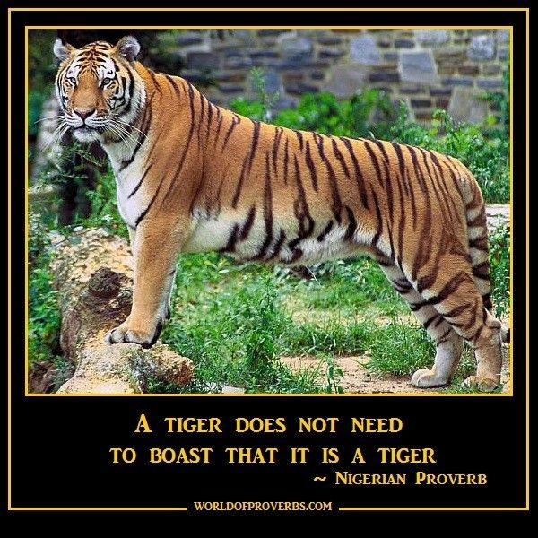 Famous Tiger Quote 1. Picture Quotes.