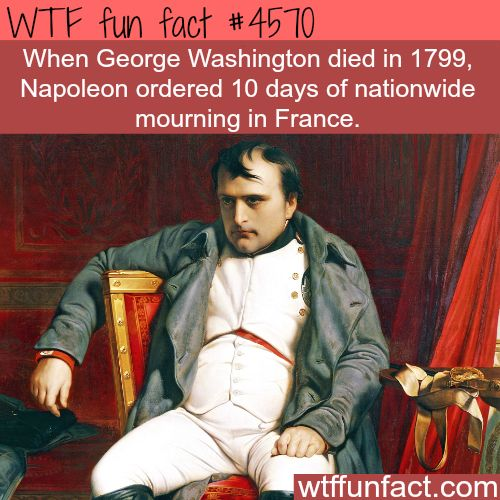 Napoleon and George Washington -   WTF fun facts                              …