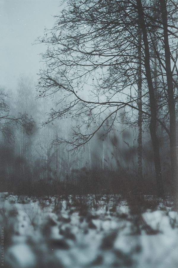 the dark woods awake... | Lost in the Fog | Nature, Mists ...