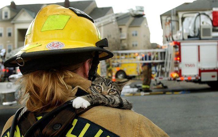Firefighters saving kitties